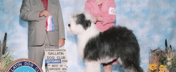 The Sheepdog: Award Winning Breed