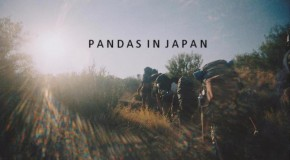 Pandas in Japan release EP: Interview